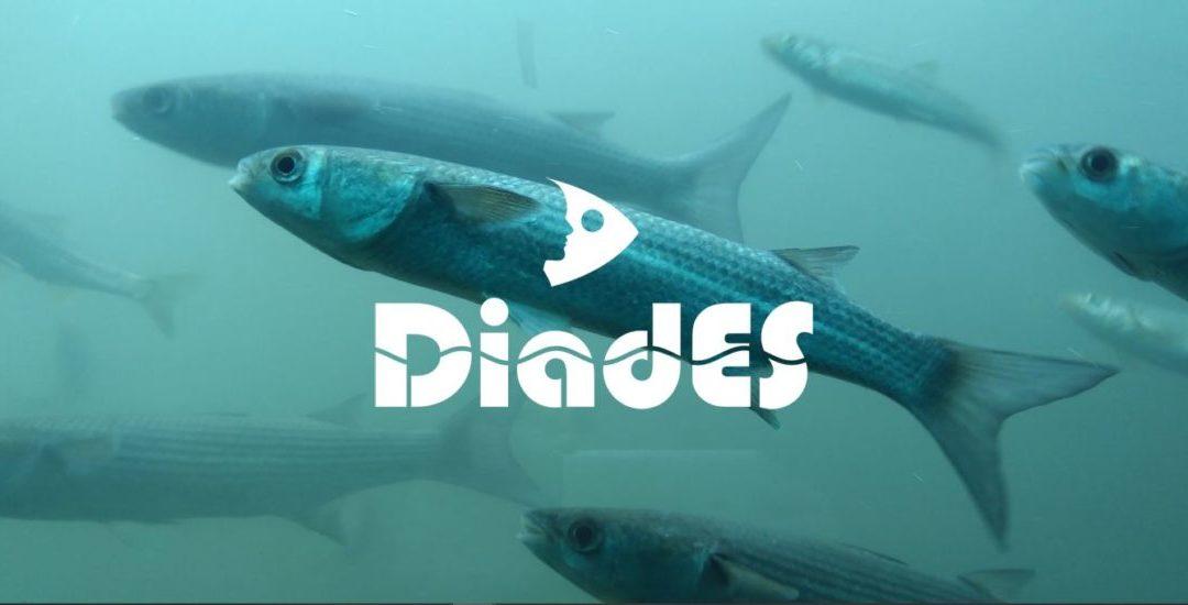 Enquête sur la pêche de loisir (Projet DiadEs)